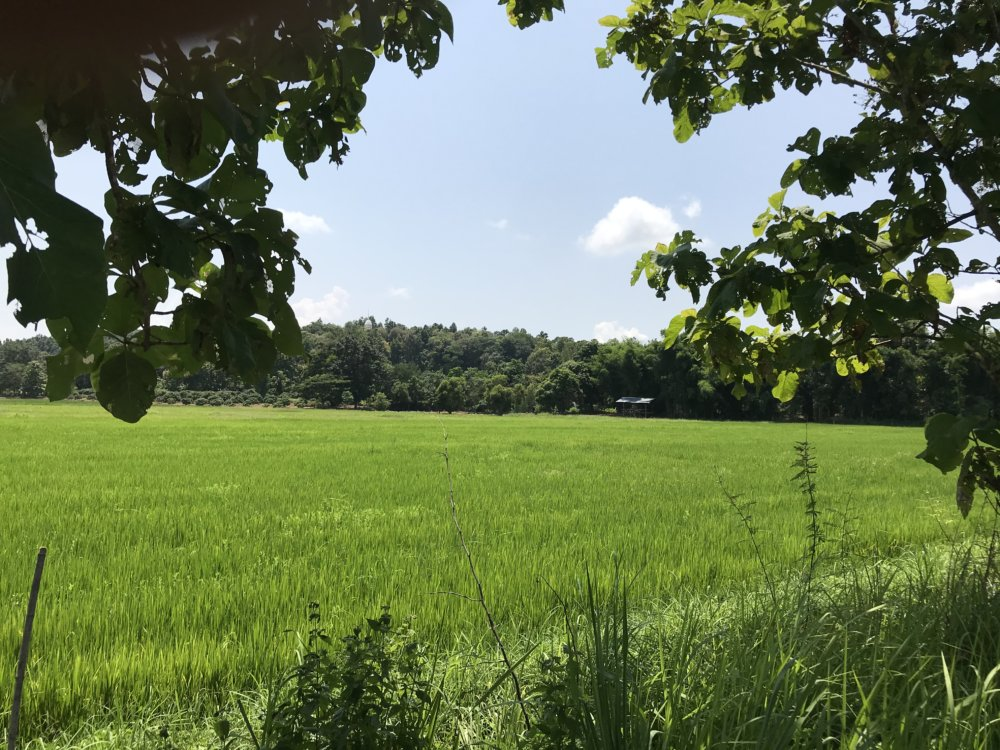 """Land For Sale Near New """"asia Silk Highway"""" In Chiang Rai"""