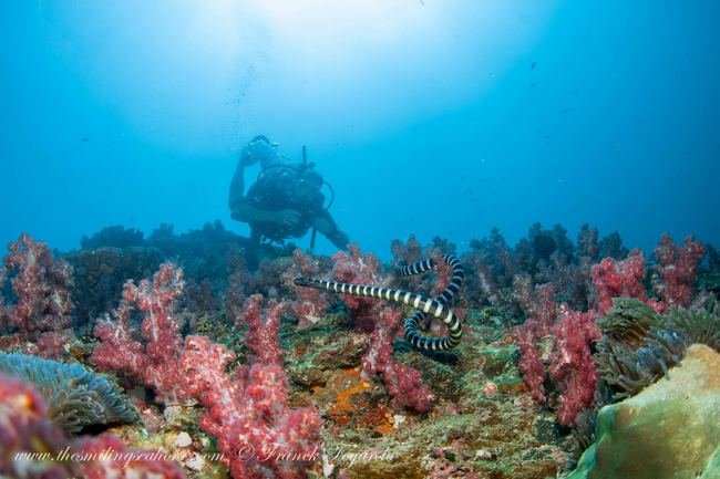 Diving in Thailand for 7 days and 6 nights