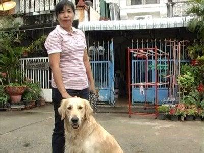 Dog snatchers terrorizing Khon Kaen | The Thaiger