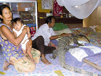 Lucky lizard finds loving home | The Thaiger