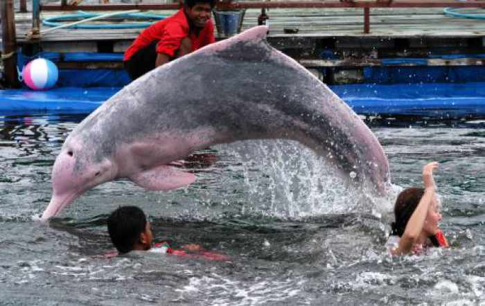 Opinion: Horrible history of dolphins in Thailand continues in Phuket   The Thaiger