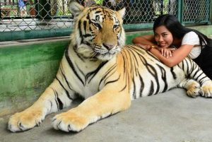 Animal shows in Phuket. 'Not in my back yard'! | News by Thaiger