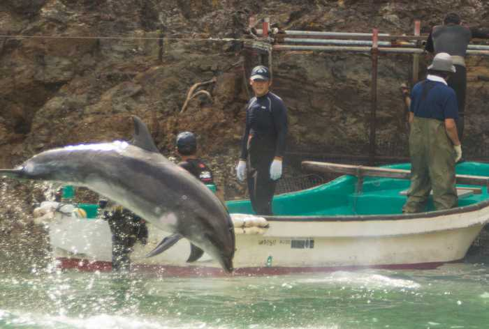Poll: 98% of tourists against Phuket dolphinarium [video] | Thaiger