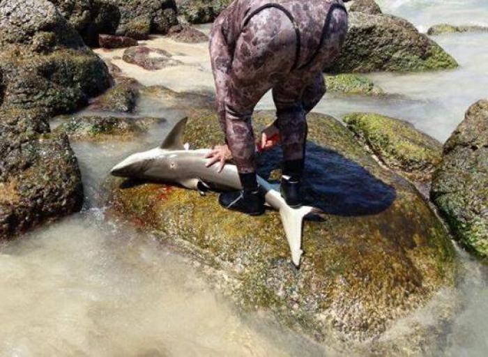 Shark killed off Phuket Beach raises online ire | Thaiger