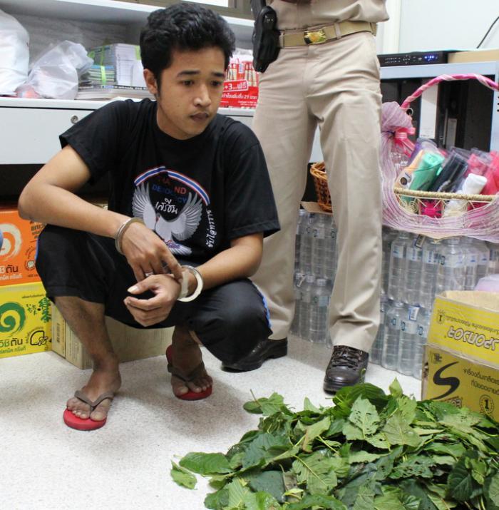 Sponsor can't prevent Phuket kratom arrest   Thaiger