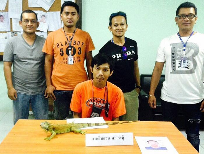 Patong police snare iguana touts on Soi Bangla | Thaiger