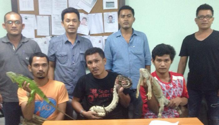 Phuket officers continue to wage war against animal touts | Thaiger