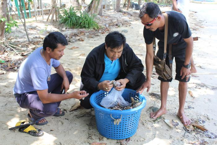 Black market coral trade takes hit as police seize more than 600 live samples in Phuket | Thaiger