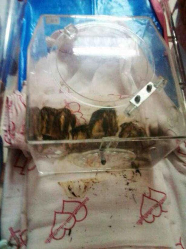 Short-circuited incubator burns Phuket baby | Thaiger