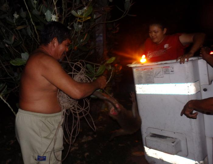 High-wire monkey causes Phuket blackout | Thaiger
