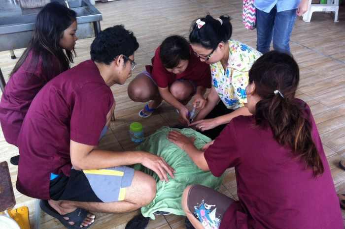 Phuket fishermen save severely injured sea turtle   Thaiger