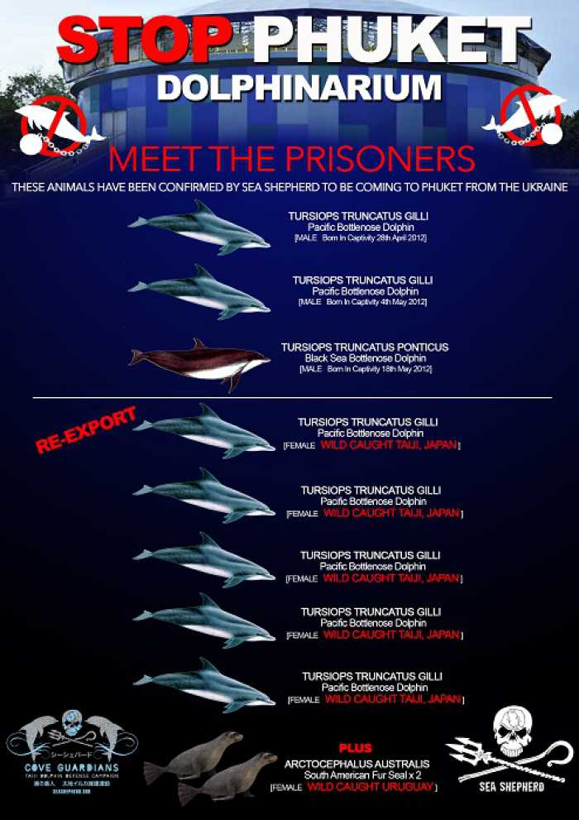 Phuket dolphin park link to Taiji massacre confirmed: Sea Shepherd [video] | Thaiger