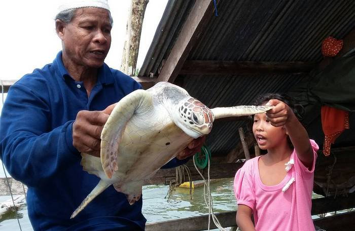Sea turtle caught with mouthful | The Thaiger