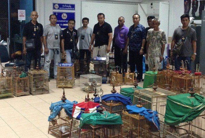 Illegal wild drugs lead to wild birds in Phuket | The Thaiger