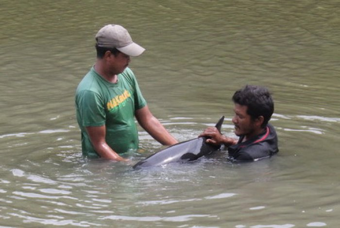 Locals discover dolphin stranded in mangroves | The Thaiger
