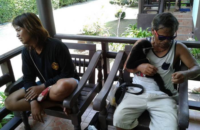 Phi Phi gibbon touts arrested | The Thaiger