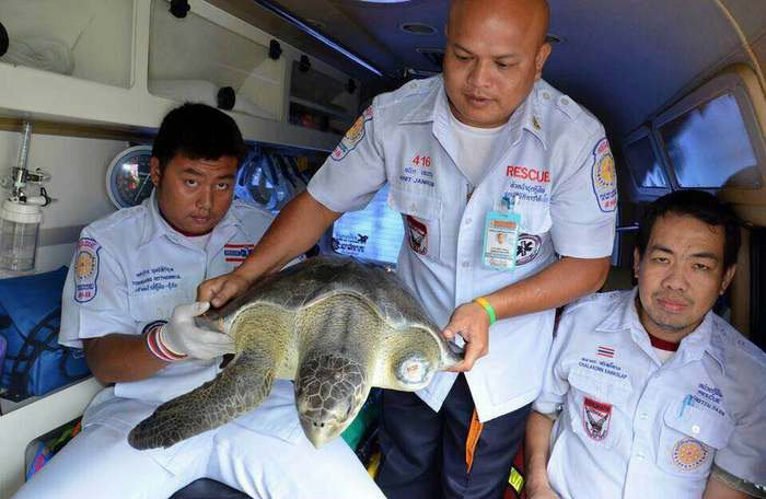 Turtle saved after somtam shop owner buys from customer | The Thaiger