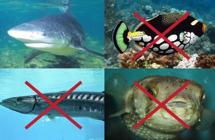 Phuket shark bite confirmed | The Thaiger