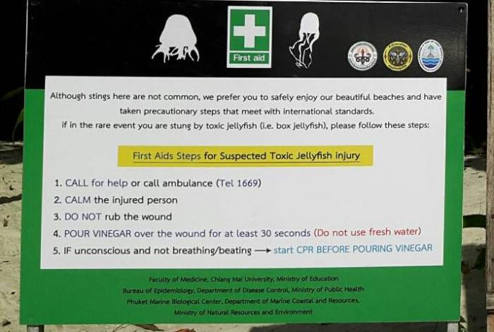 Public warned of jellyfish dangers in Krabi | The Thaiger