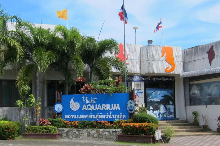 Divers sought for Phuket seahorse release | The Thaiger