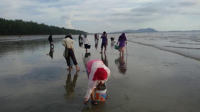 Koh Lanta villagers cash in on seasonal shellfish | The Thaiger