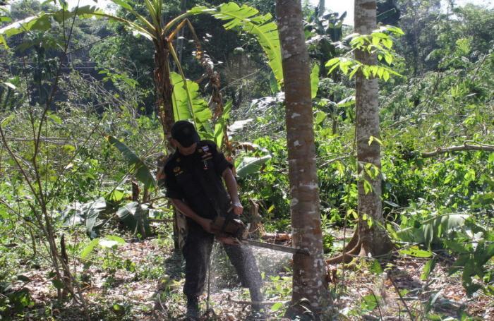 Phuket officials demolish illegal man-made plantations | The Thaiger