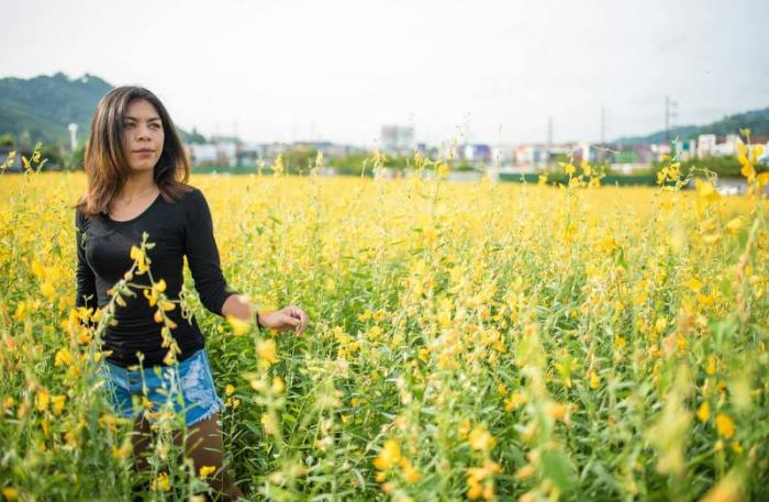 Samkong 'fields of gold' attract locals, tourists | The Thaiger