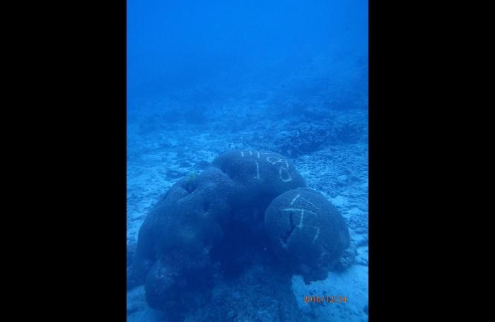 Similan coral defaced with Korean name | The Thaiger