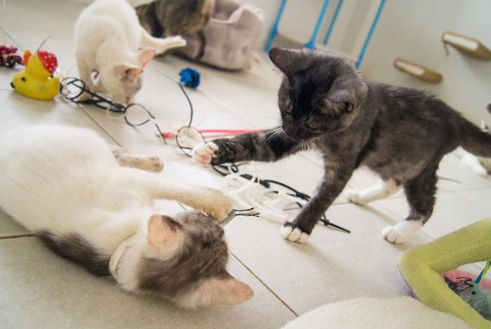 Open your heart and home to a soi puppy, kitten or cat   The Thaiger