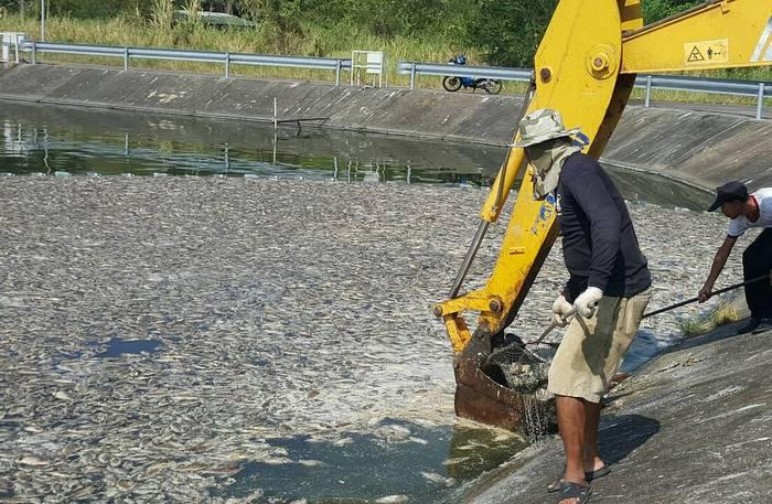 Krabi City officials drowning in dead fish   The Thaiger