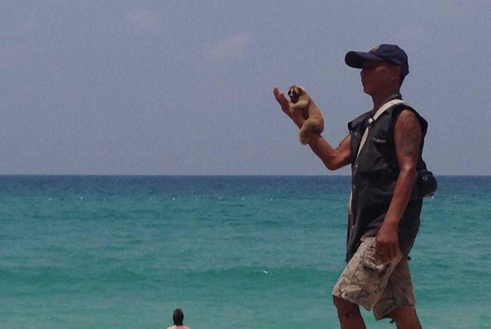 Phuket police hunt slow loris tout on Kata Noi Beach | The Thaiger