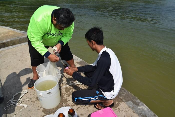 Patong Bay safe for swimming, despite algae bloom, say experts | The Thaiger