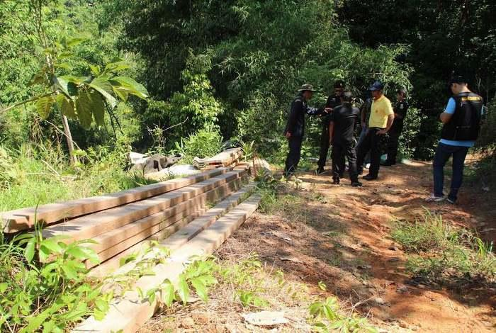Illegal lumber cache confiscated in protected forest | The Thaiger