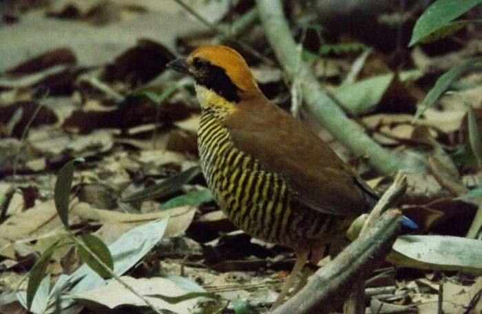Environmentalists to build 'love nest' to breed rare birds   The Thaiger