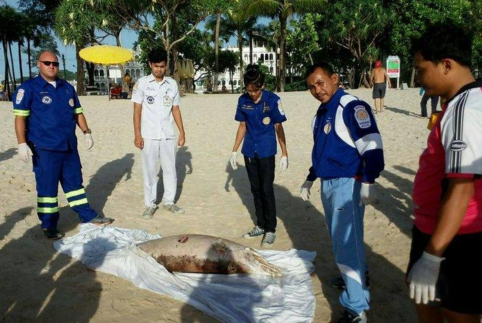 Dolphins washing ashore, injured or dead | The Thaiger