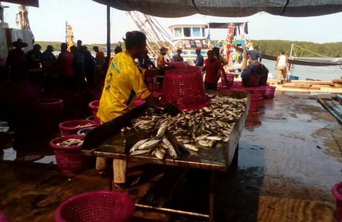 'Fish are scarce' report Krabi fishermen | The Thaiger