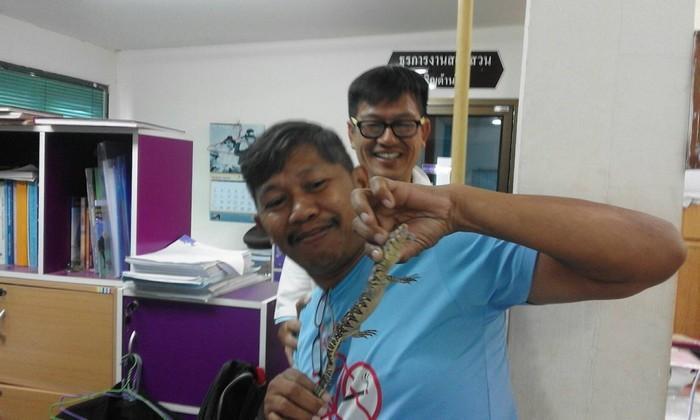 Reptile raids Krabi cop shop, ambushed by police | The Thaiger
