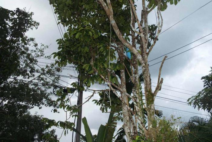 Four-year-old finds father hanging from tree   The Thaiger