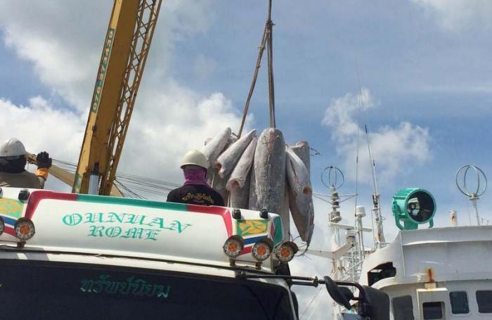 2,700 tonnes of frozen fish moved off detained vessel | The Thaiger