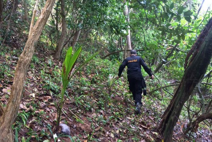 """""""Illegally-planted' coconut trees found on disputed Naka Noi land   The Thaiger"""