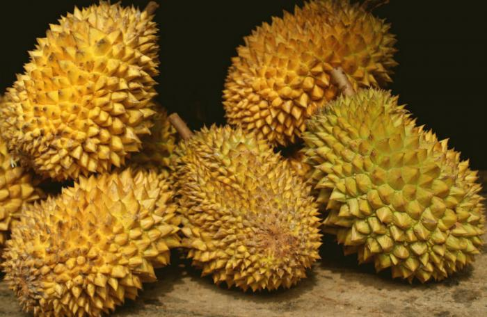 Phuket durian to be upgraded as GI product | The Thaiger