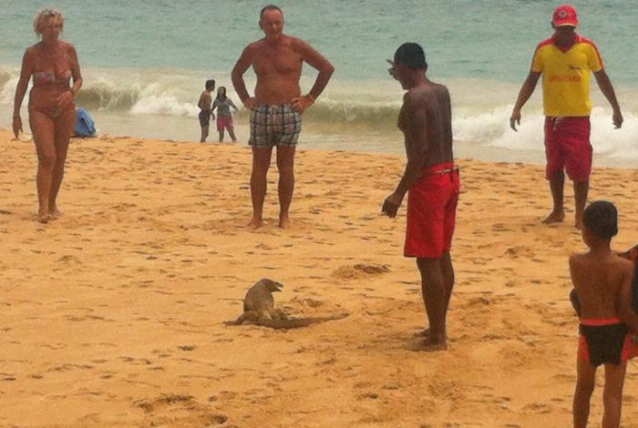 Meter-long lizard causes scare at Phuket beach   The Thaiger