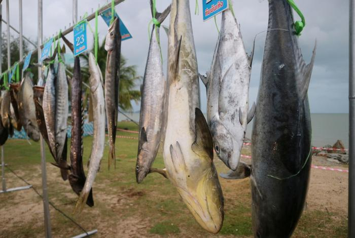 Phuket Municipality brings in 150,000 baht at fishing festival | The Thaiger