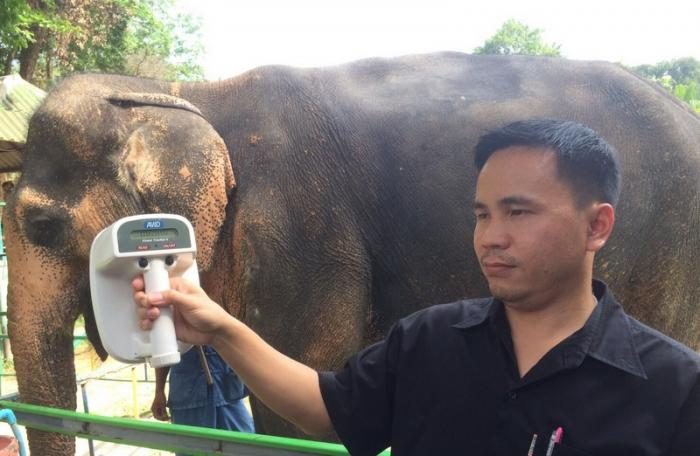 Officials to examine disputed Phuket elephant's documents | The Thaiger