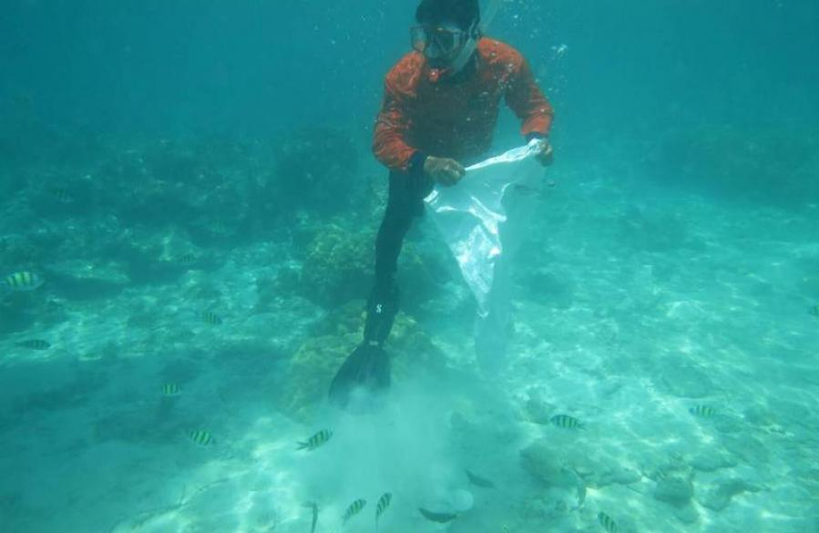 Marine officials return confiscated coral to the ocean | The Thaiger