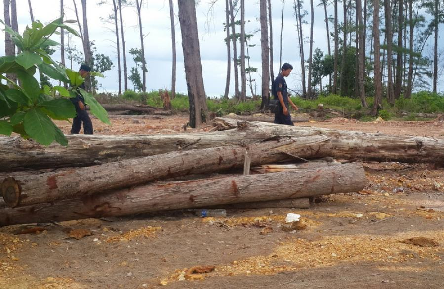 Company land under investigation after hundreds of trees destroyed | The Thaiger