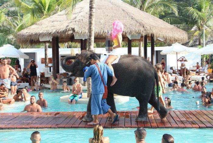 Elephants banned from Nikki Beach Club Phuket following firestorm | Thaiger