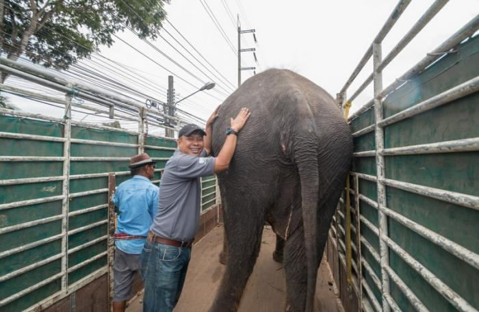 Profile: Montree Todtan – Rescuing nature's gentle giants | The Thaiger
