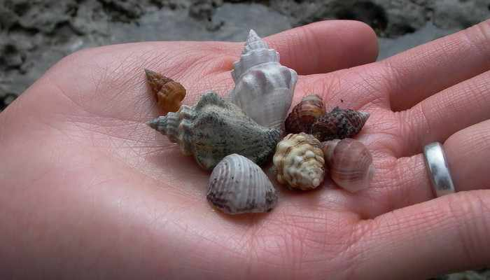 Phuket told to send seashells back to seashore | Thaiger