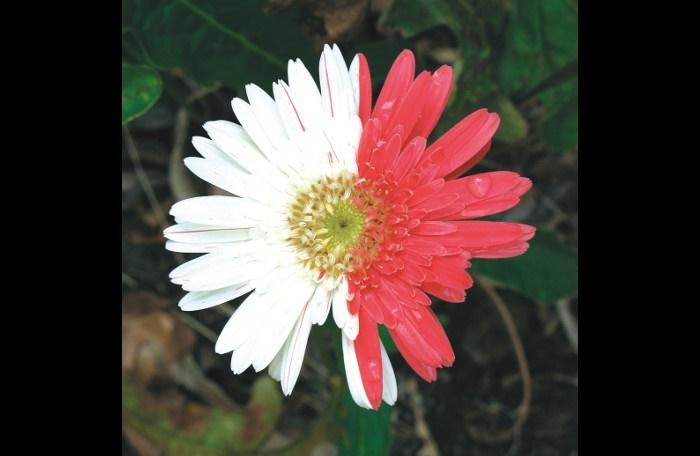 Gardening: Putting annuals on display | The Thaiger